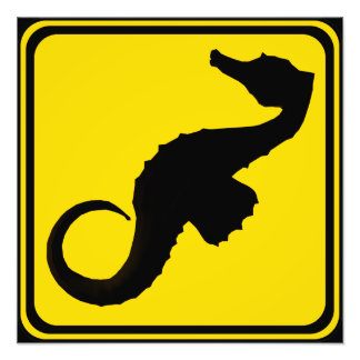 Attention: Seahorses Xing! Photo Print