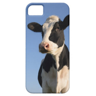 Attentive cow iPhone 5 case