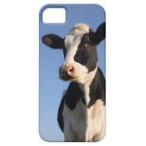 Attentive cow iPhone SE/5/5s case