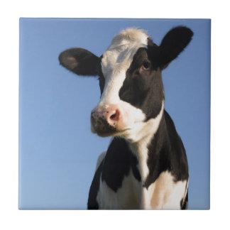 Attentive cow tile