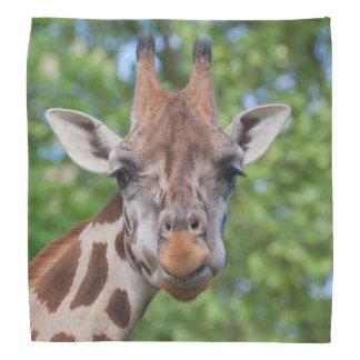Attentive Giraffe Bandana