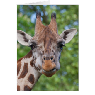 Attentive Giraffe Card