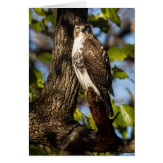 Attentive Hawk Card