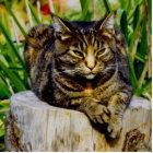 Attitude Cat Cutout