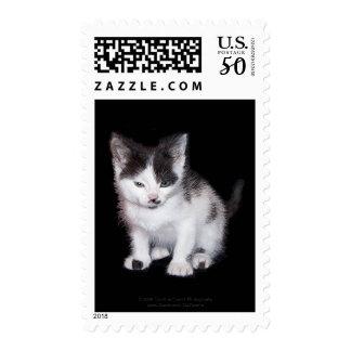 Attitude Kitten Postage