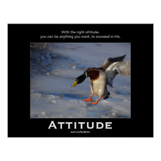 Attitude Mallard Duck Motivational Posters