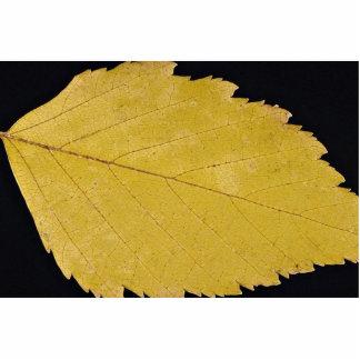 Attractive Paper birch leaf Photo Sculpture