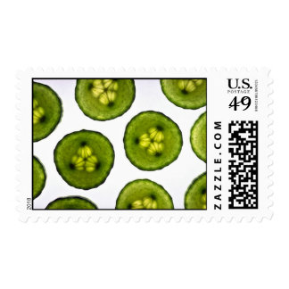 Attractive slices of cucumber stamps