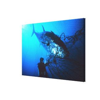 Atún de Bluefin gigante cogido en una red Lienzo Envuelto Para Galerías