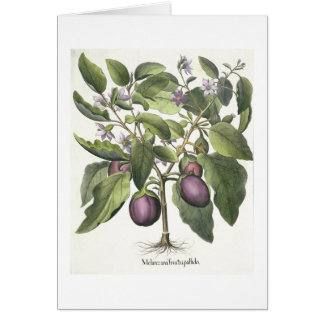 Aubergine: Melanzana fructu pallido, from the 'Hor Card