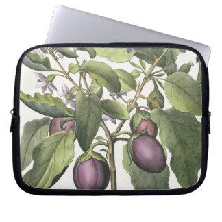 Aubergine: Melanzana fructu pallido, from the 'Hor Laptop Computer Sleeve