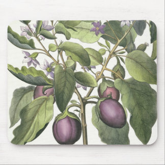 Aubergine: Melanzana fructu pallido, from the 'Hor Mouse Pad