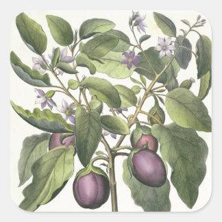Aubergine: Melanzana fructu pallido, from the 'Hor Square Sticker