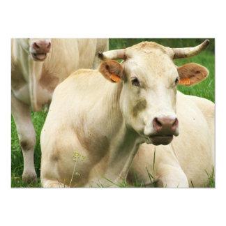 Aubrac Cows in a Field Card