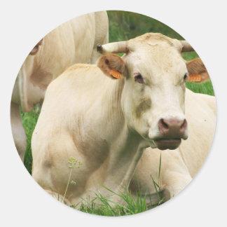 Aubrac Cows in a Field Classic Round Sticker