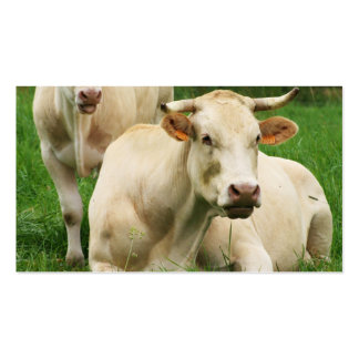 Aubrac Cows in a Field Double-Sided Standard Business Cards (Pack Of 100)