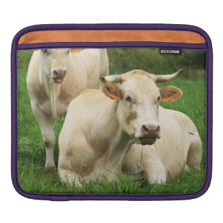 Aubrac Cows in a Field iPad Sleeve