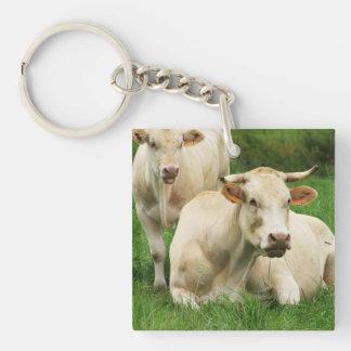 Aubrac Cows in a Field Keychain