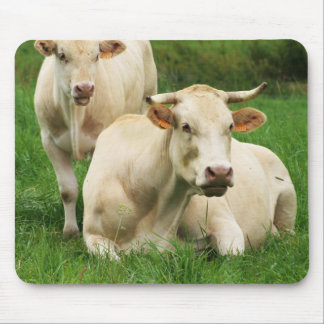 Aubrac Cows in a Field Mouse Pad