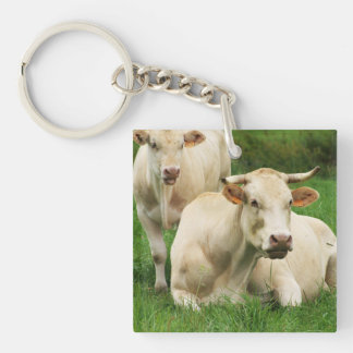 Aubrac Cows in a Field Single-Sided Square Acrylic Keychain