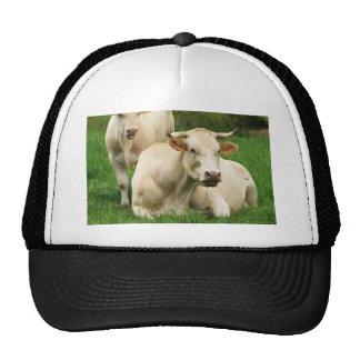 Aubrac Cows in a Field Trucker Hat