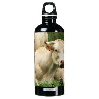 Aubrac Cows in a Field Water Bottle