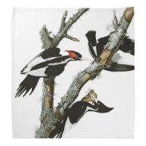 Aububon's Ivory-billed Woodpecker in Ash tree Bandana