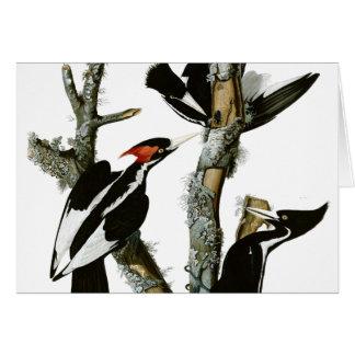 Aububon's Ivory-billed Woodpecker in Ash tree Stationery Note Card