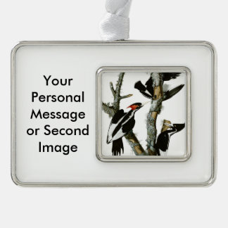 Aububon's Ivory-billed Woodpecker in Ash tree Christmas Ornament