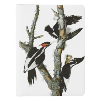 Aububon's Ivory-billed Woodpecker in Ash tree Extra Large Moleskine Notebook