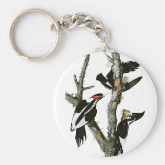 Aububon's Ivory-billed Woodpecker in Ash tree Keychain