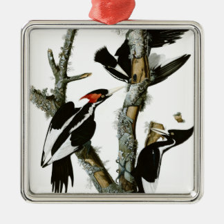 Aububon's Ivory-billed Woodpecker in Ash tree Metal Ornament