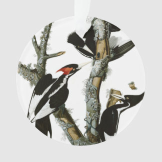 Aububon's Ivory-billed Woodpecker in Ash tree Ornament