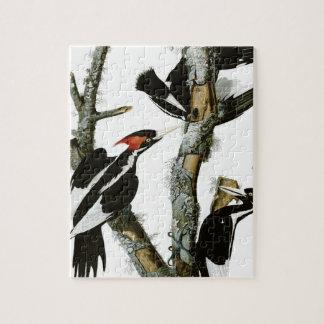 Aububon's Ivory-billed Woodpecker in Ash tree Puzzles