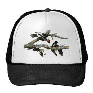 Aububon's Ivory-billed Woodpecker in Ash tree Trucker Hat