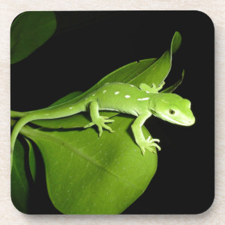 Auckland Green Gecko Coaster