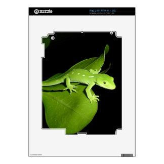 Auckland Green Gecko iPad 2 Decal