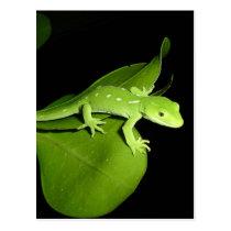 Auckland Green Gecko Postcard