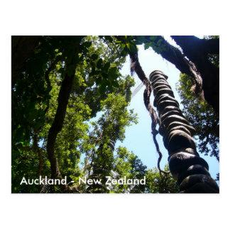 Auckland Post card