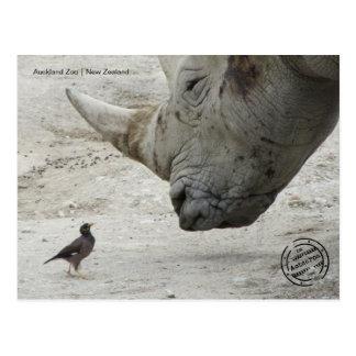 Auckland zoo (New Zealand) postcard