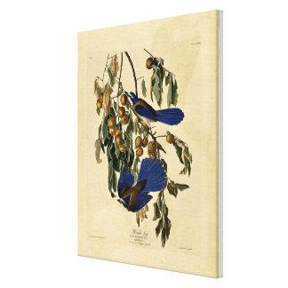 Audobon - Florida Jay Stretched Canvas Print