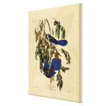 Audobon - Florida Jay Stretched Canvas Print