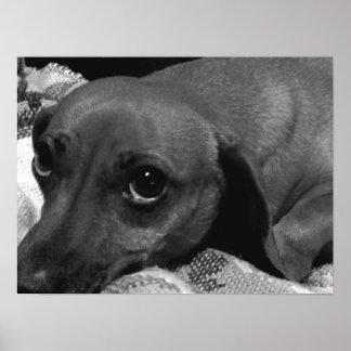 Audrey: Dachshund Dog Poster