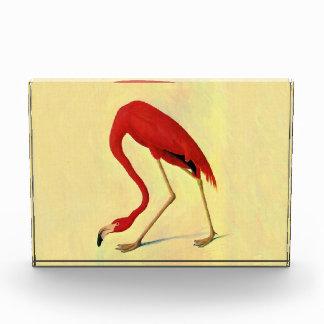 Audubon American Flamingo Painting Acrylic Award