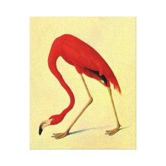 Audubon American Flamingo Painting Canvas Prints