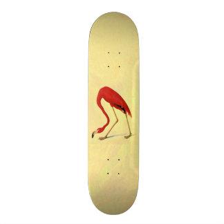 Audubon American Flamingo Painting Custom Skateboard