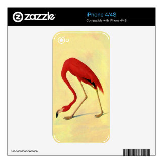 Audubon American Flamingo Painting Decal For iPhone 4