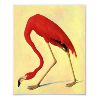 Audubon American Flamingo Painting Art Photo