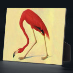"""Audubon American Flamingo Painting Plaque<br><div class=""""desc"""">Audubon American Flamingo Painting  Beautiful and elegant flamingo from the book &quot;Birds of America&quot; in vibrant colors with hints of coral red against a yellow background.  Artistic cute vintage bird fine art illustration print.</div>"""