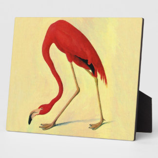 Audubon American Flamingo Painting Photo Plaques